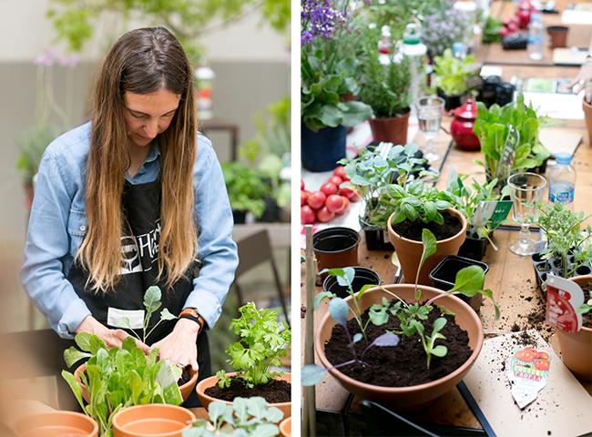 taller de jardineria di cesis de t nger